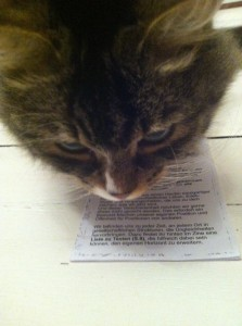 Bild: Katze hält ihren Kopf über das Hosentaschenzine